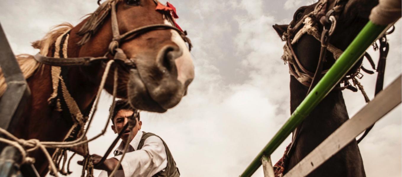 photo of horses by Libero Antonio Di Zinno