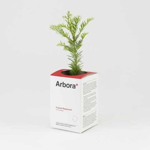 /Arbora by Jisu Kim (via Dieline)